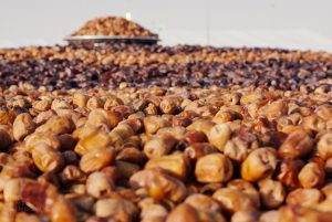Zahedi dates suppliers
