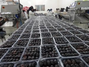 Mazafati dates suppliers and online shopping from Valid websites