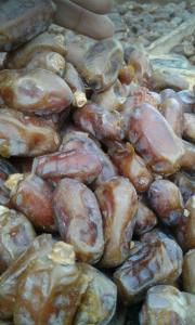 sayer dates