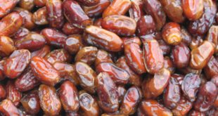 sayer dates suppliers
