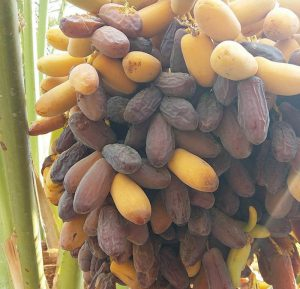 price piarom dates