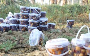 Kabkab dates iran